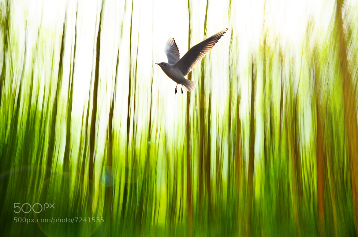 Photograph In flight by Yulia R on 500px
