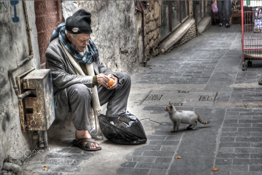 Photograph Hey old Man this not a vegetarian cat !! by jamil ghanayem on 500px