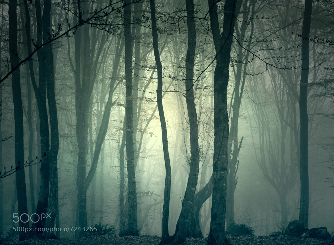 Photograph |At This Forest...| by Naghmeh Salehi on 500px
