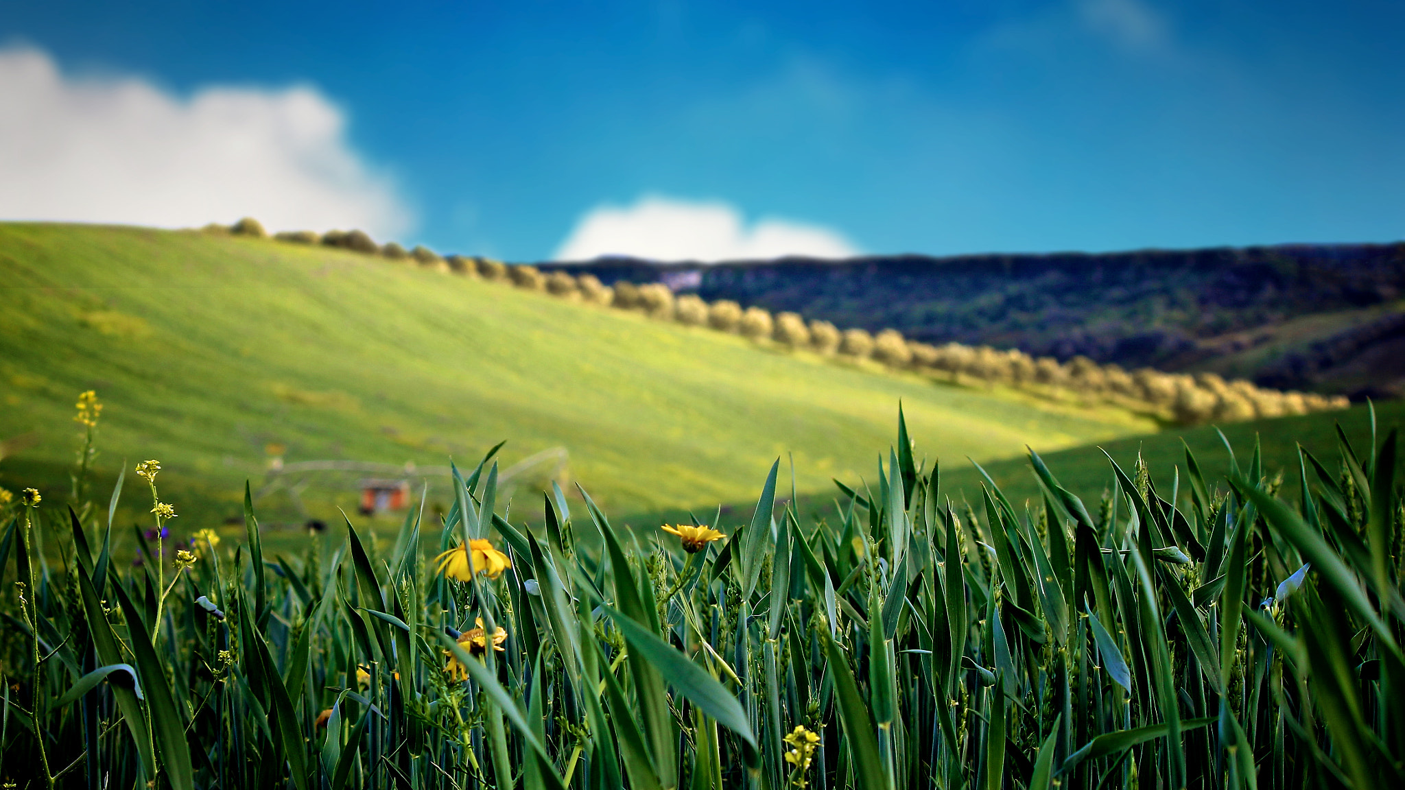 Photograph Green Hill (2) by Rui Mendonza on 500px