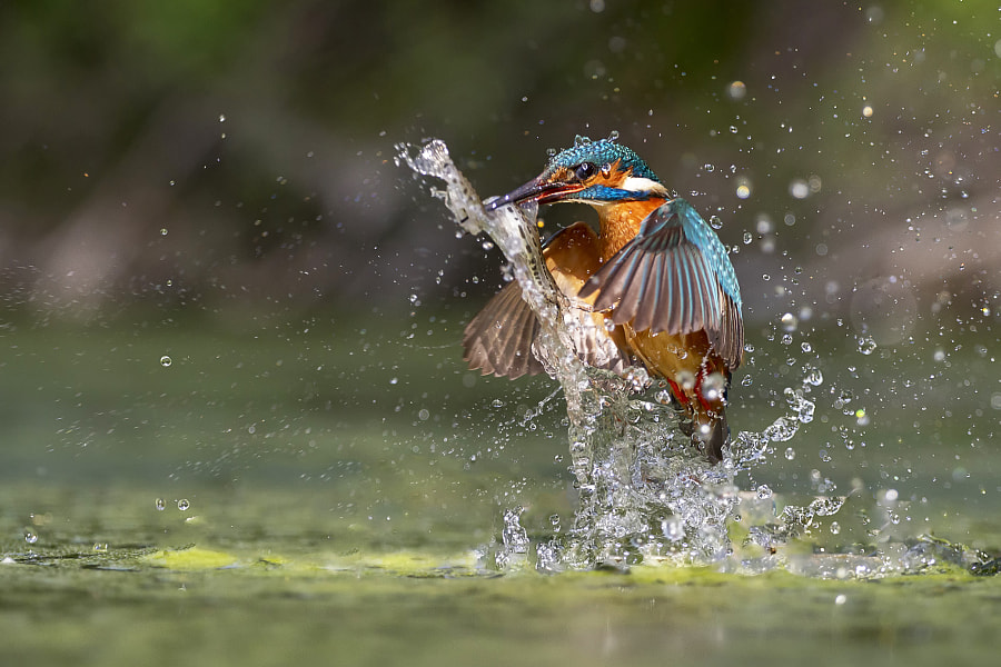 Catch in the sun by Marco Redaelli on 500px.com