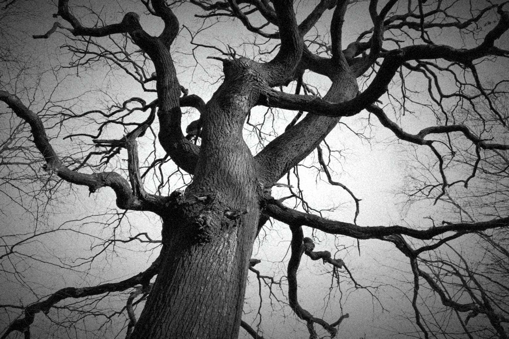 Photograph My tree by Sara S. on 500px