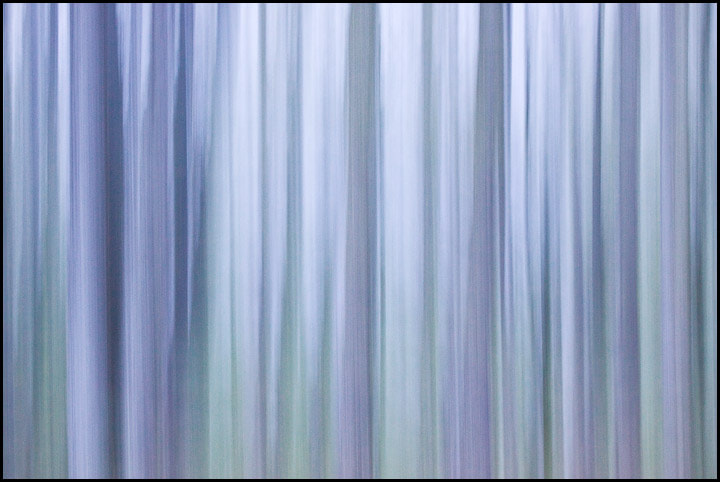 Photograph Ghosts of the Forest by Chris Kayler on 500px