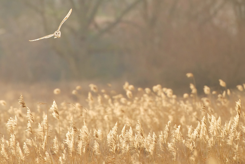 Photograph Hunting for breakfast by Mark Bridger on 500px