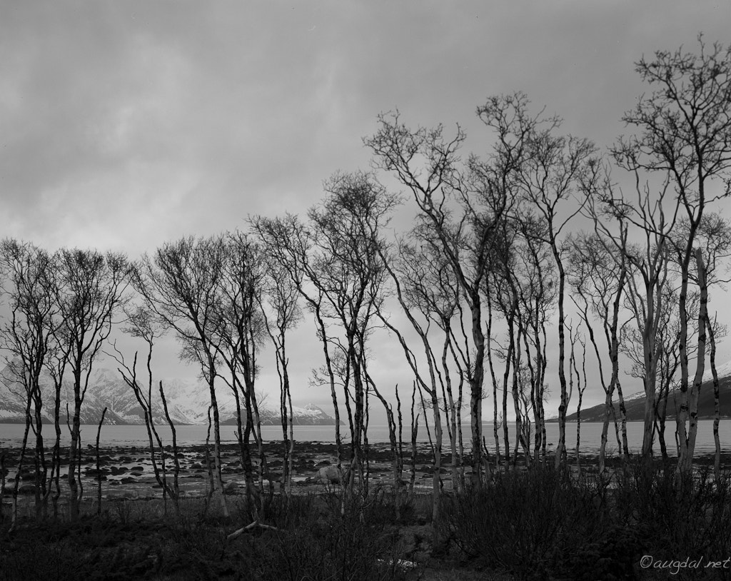 Photograph Naked trees by Kenneth Augdal on 500px