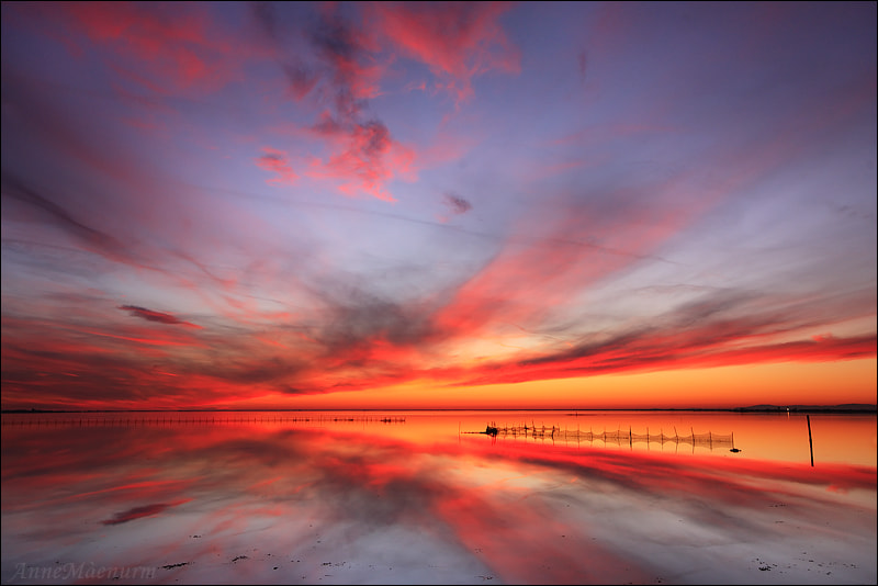 Photograph In the fire by Anne Mäenurm on 500px