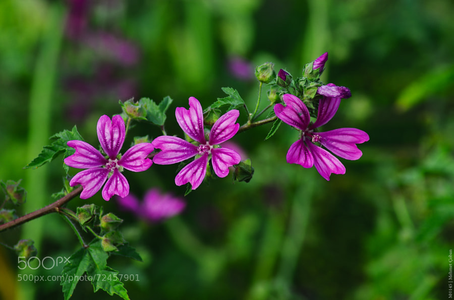 Photograph Flowers remind me love by Mehmet Çoban on 500px