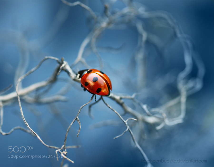 Red Lady bug macro