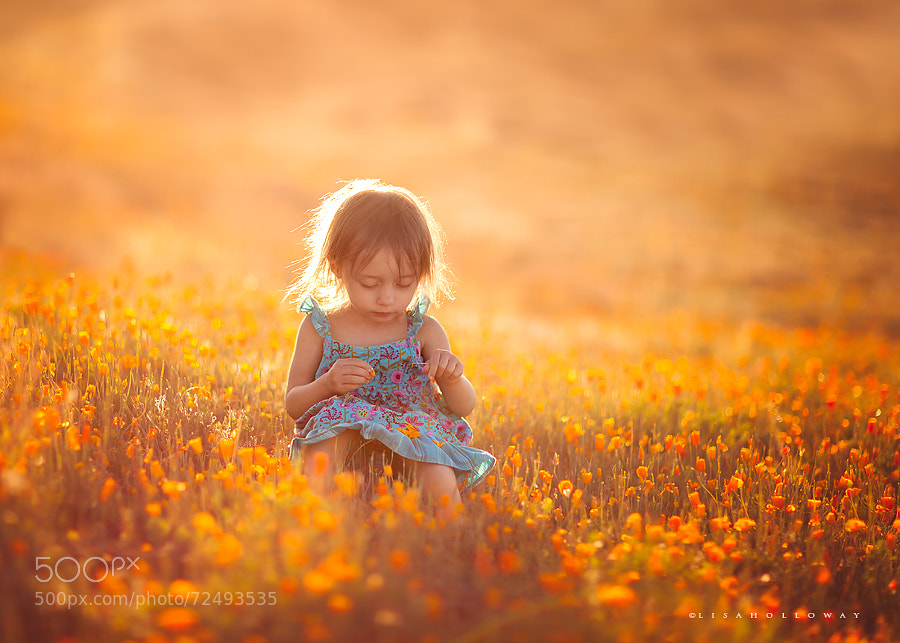 Photograph Collecting Sunshine by Lisa Holloway on 500px