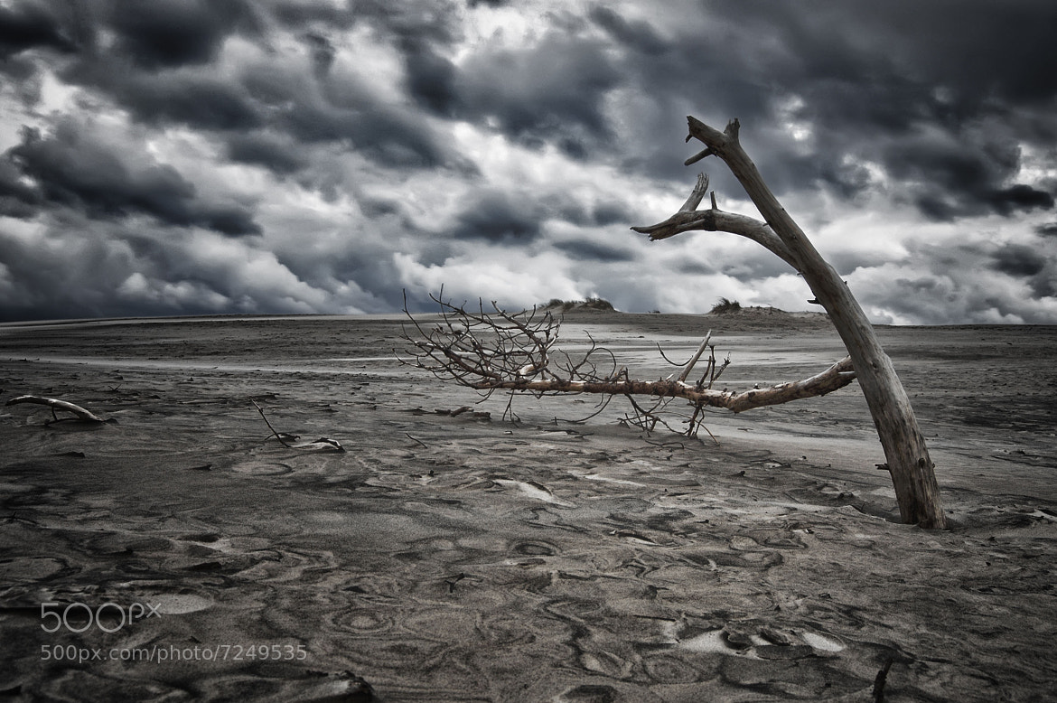 Photograph The Withered Tree by Marco Møller on 500px