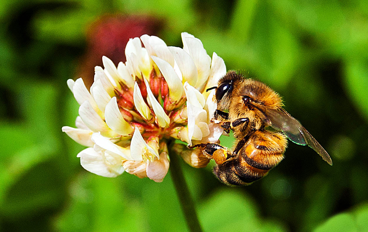 Photograph Bee by Javier Carreño on 500px
