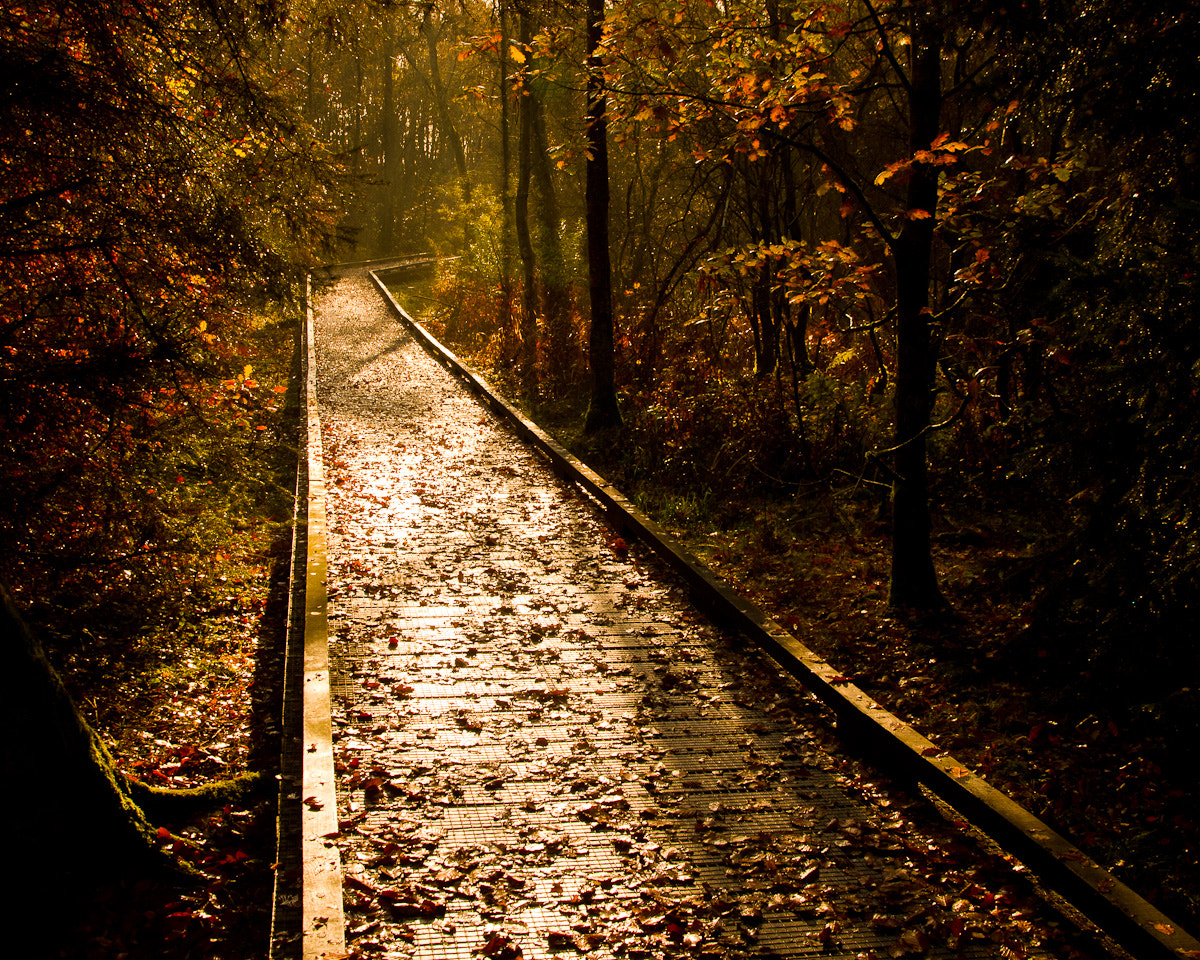 Photograph Walk in the Woods by darrenirwin on 500px
