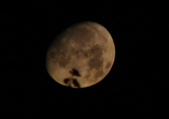 Photograph Moon Close up by Luis Aviles on 500px