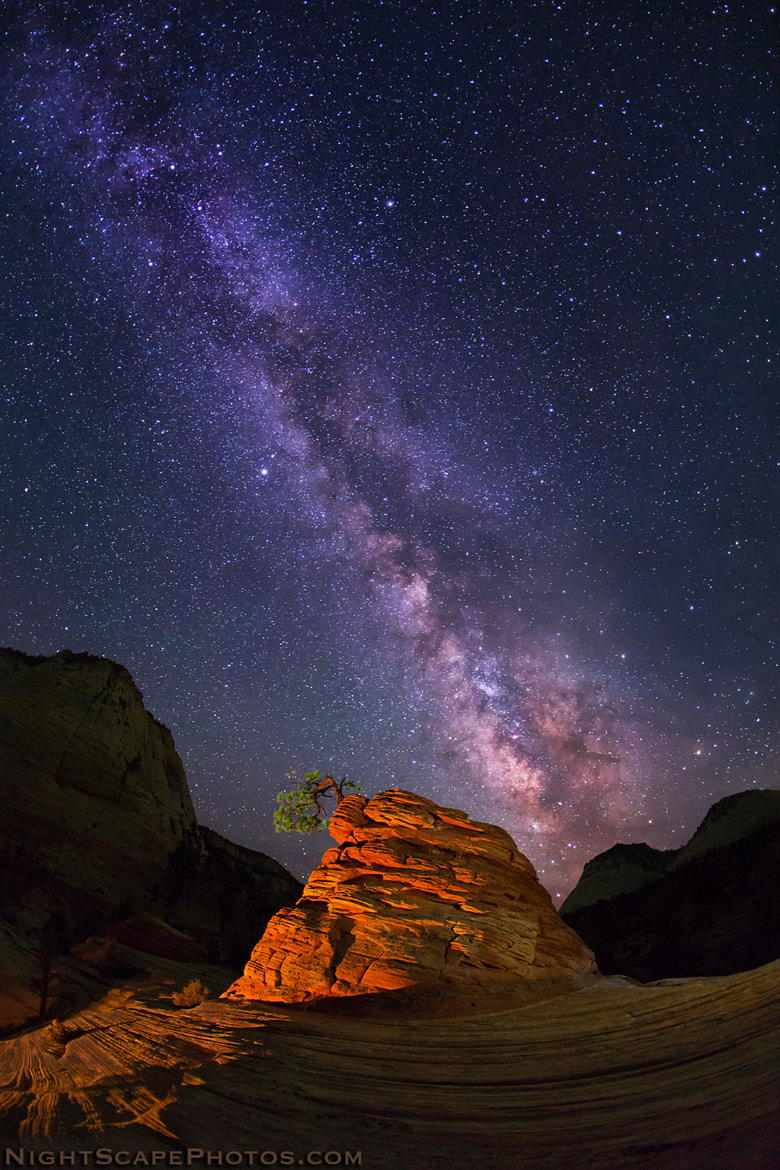 Photograph Life Struggles by Royce's NightScapes on 500px