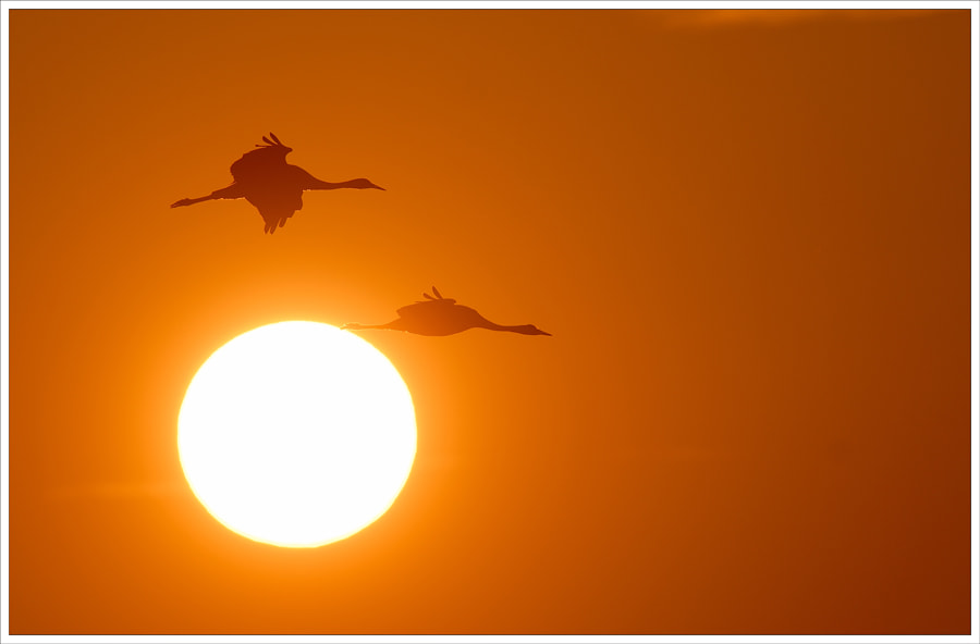Photograph sunbirds by N Mikael Svensson on 500px