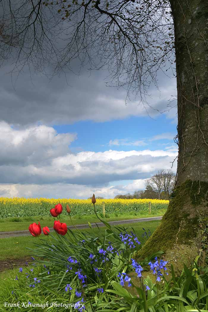 Photograph All The Colours Of Spring by Frank  Kavanagh on 500px