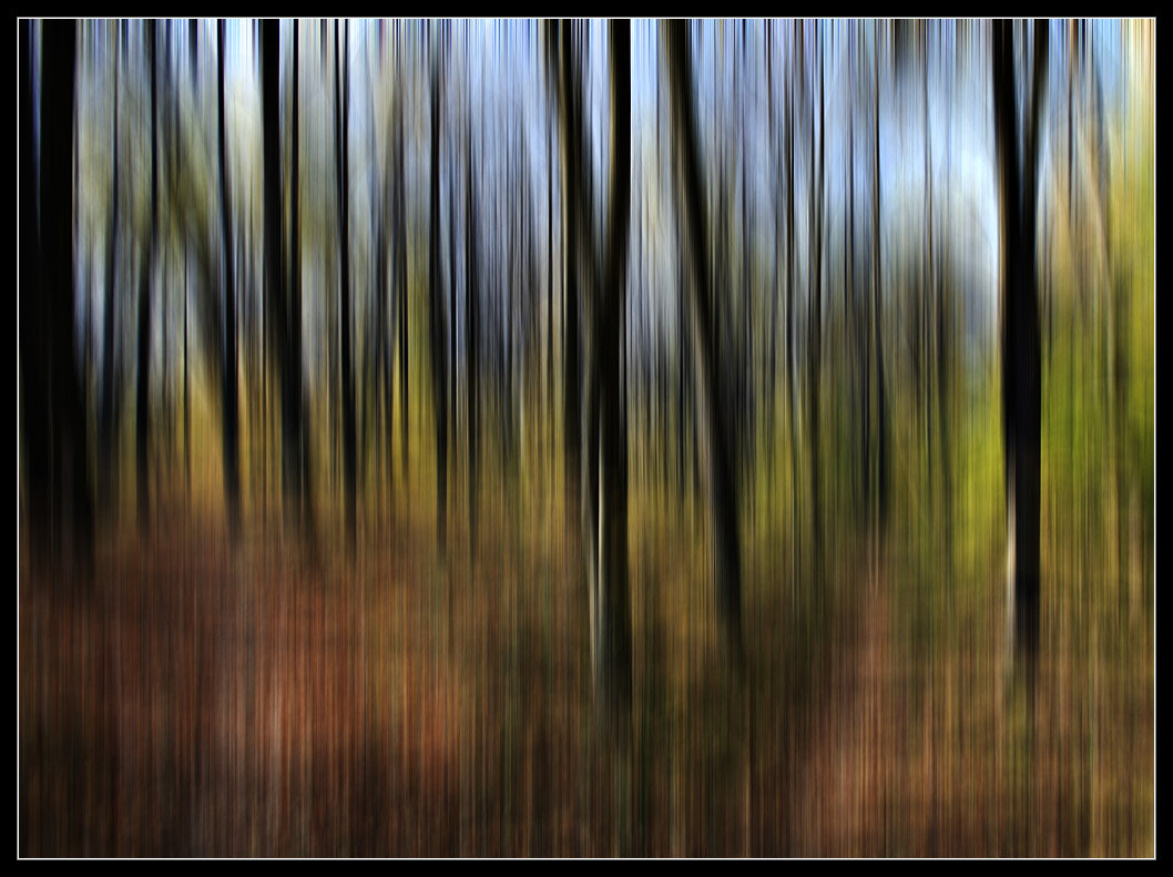 Photograph music of forest by Vladimir Klinton on 500px