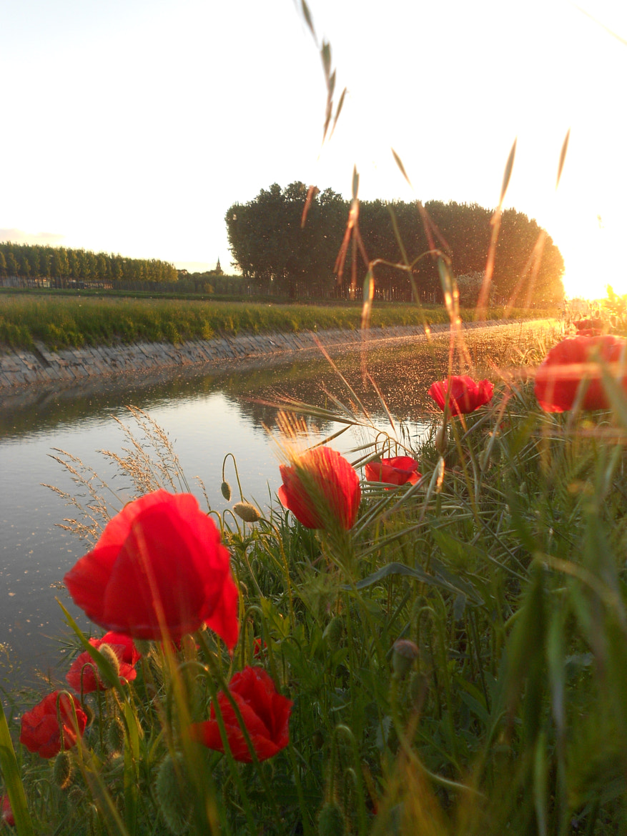 Photograph Sunset poppies by Davide C. on 500px