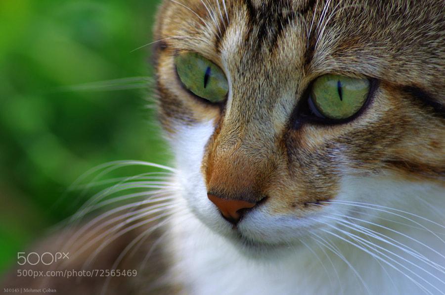 Photograph close-up portrait by Mehmet Çoban on 500px