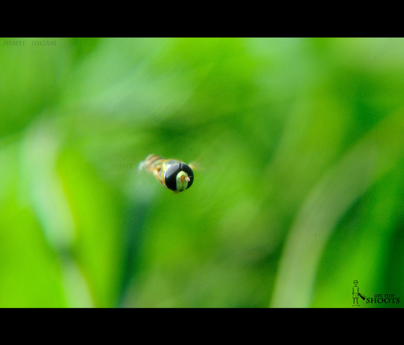 Photograph Catch Me If You Can by Nimit Nigam on 500px