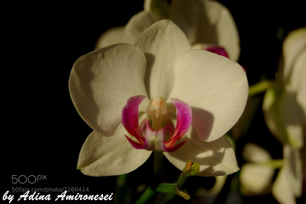 Photograph White orchid by Adina Amironesei on 500px