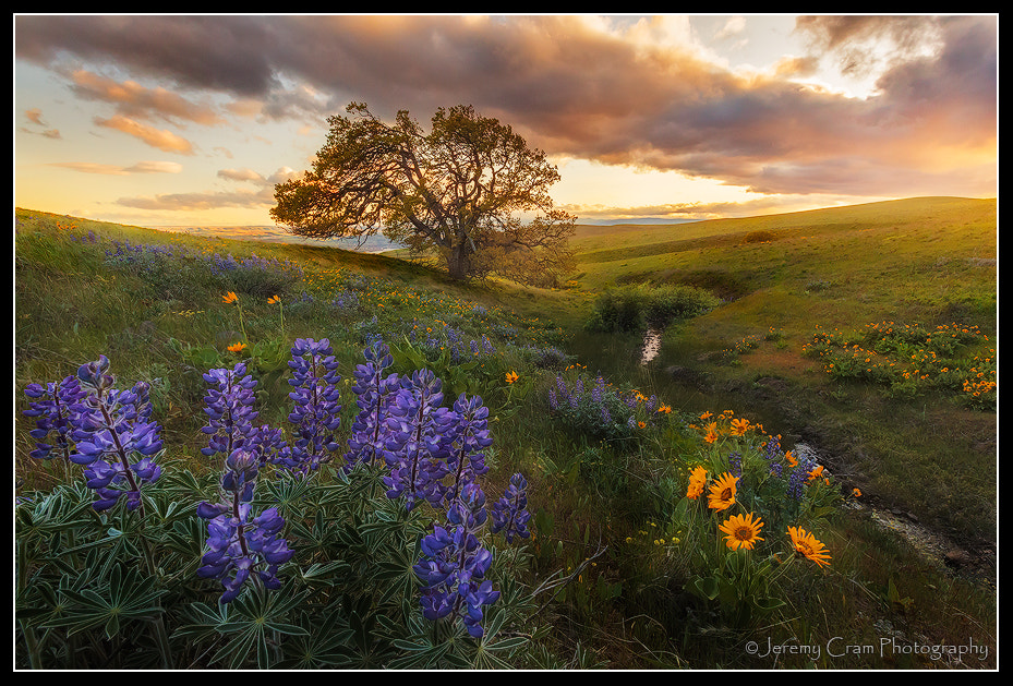 Photograph Columbia Hills Concerto by Jeremy Cram on 500px