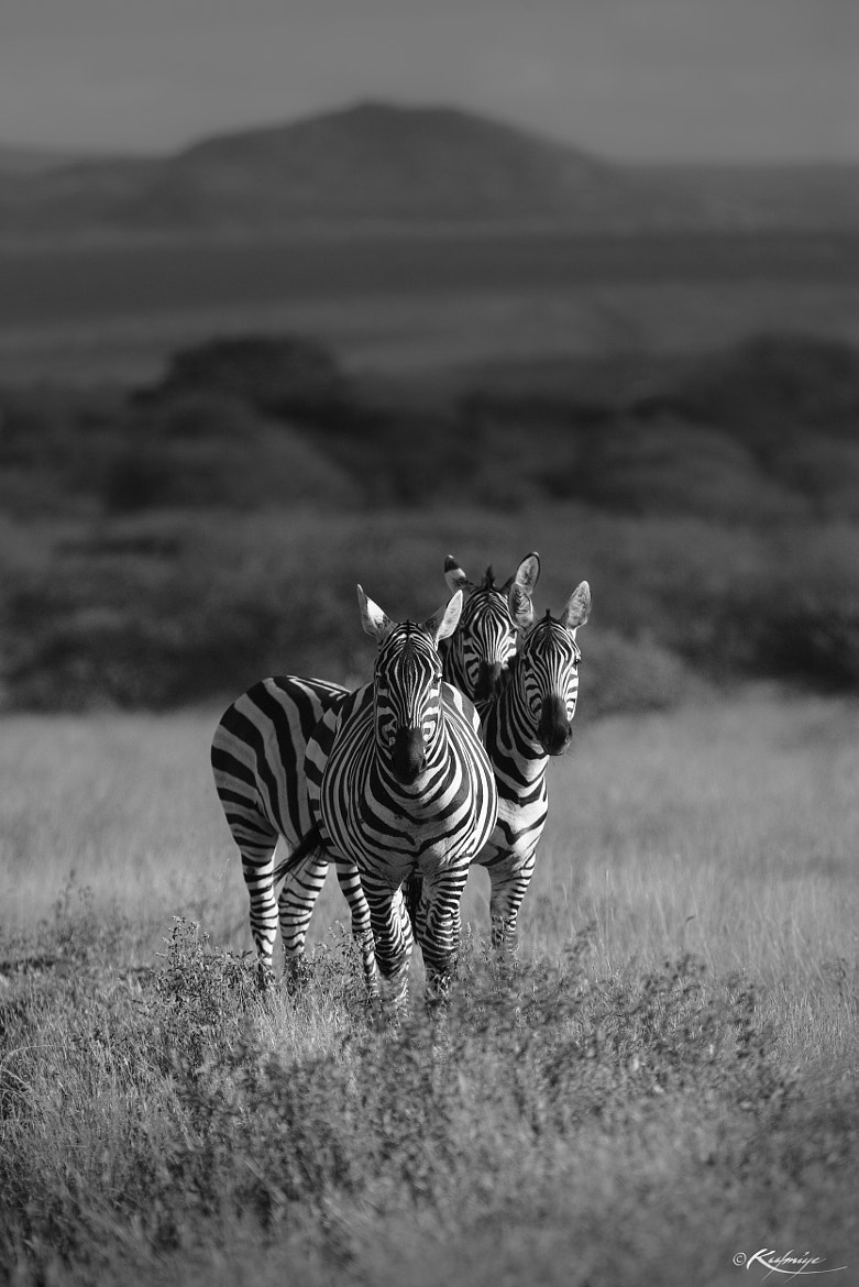 Photograph The Stripes : Trio by Kulmiye Chan on 500px
