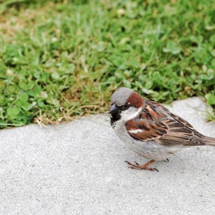 Avec son plumage nuptial, le piaf fait le beau