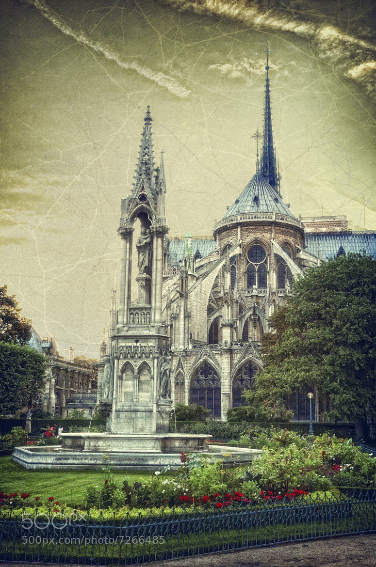 Photograph Notre-Dame by JESUS SILVA ANDRADE on 500px