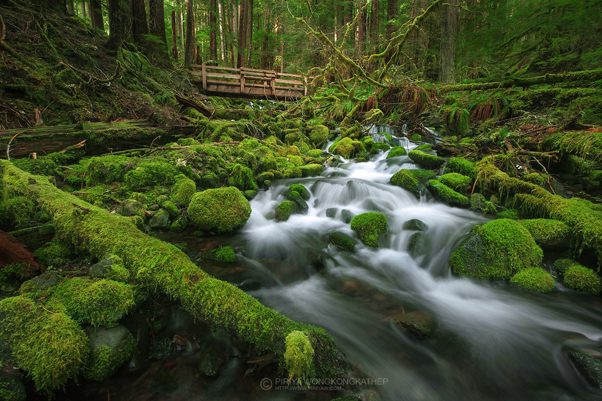 Photograph Go Green by Pete Wongkongkathep on 500px