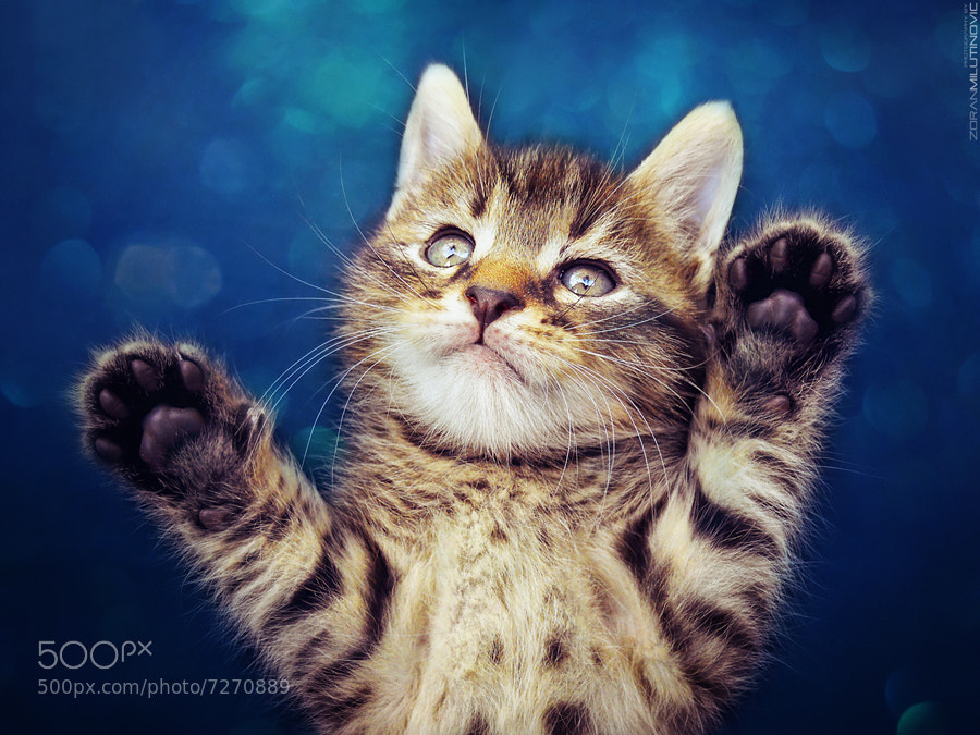 Photograph Paws Up by Zoran Milutinovic on 500px