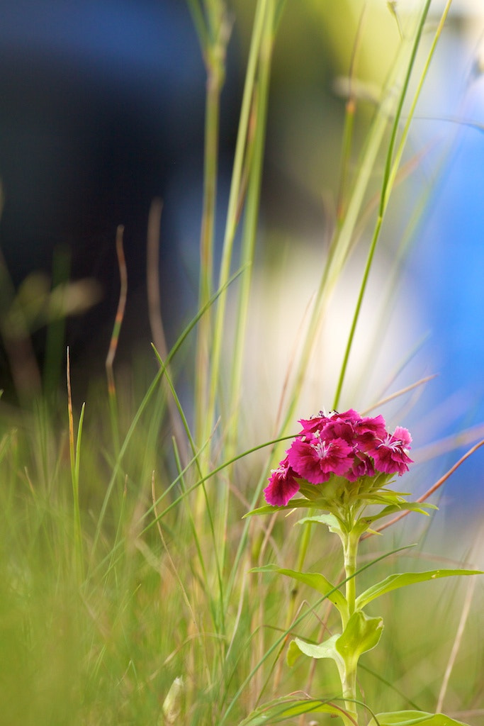 Photograph Bad weeds? by Jan  on 500px