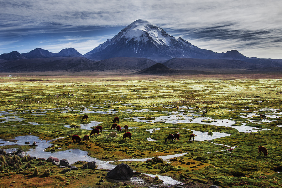 Photograph Sajama National Park by Hose  Benasco on 500px