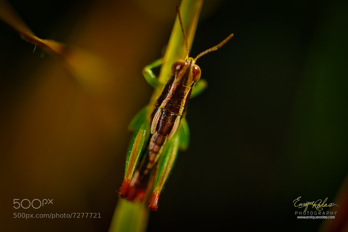 Photograph The other insect by Enrique Rodas on 500px