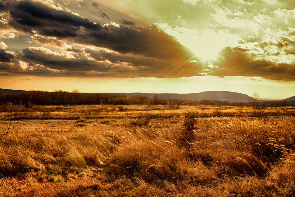 Photograph catcher in the rye by Andy Butkaj on 500px