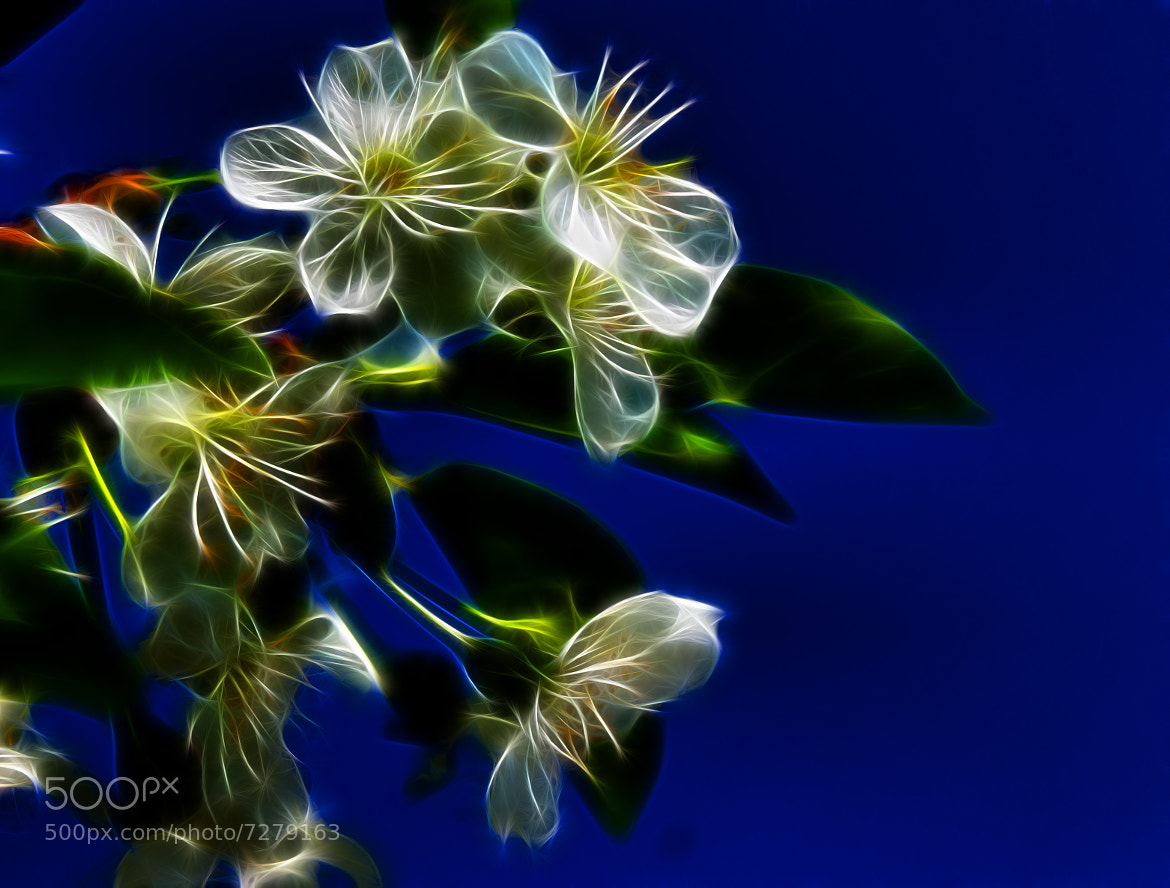 Photograph White flowers by Rausch Wilhelm Robert on 500px