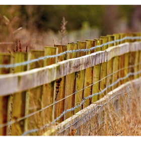 Fence by Jason Wood (jswood)) on 500px.com