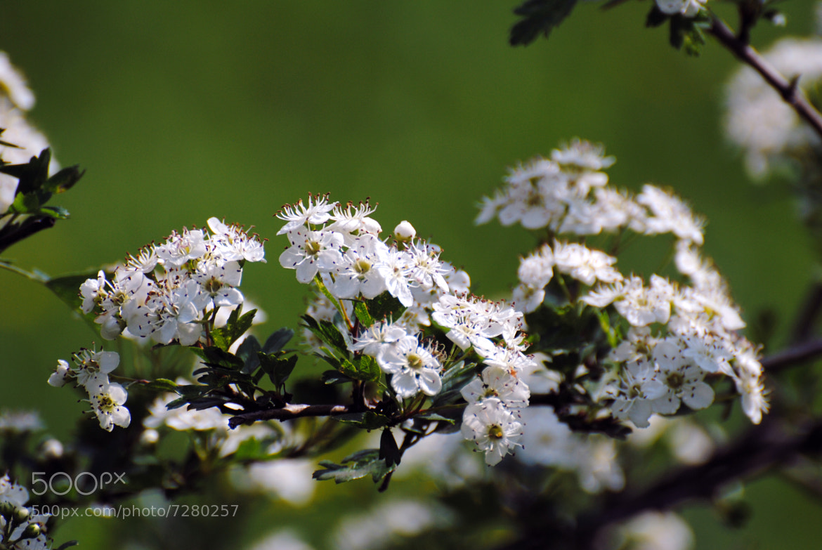 Photograph Song of Spring by Umberto Forlini on 500px