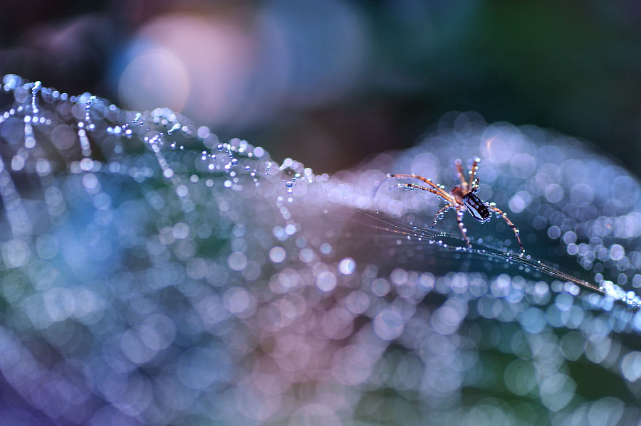 Welcome,Welcome by Lafugue Logos on 500px.com