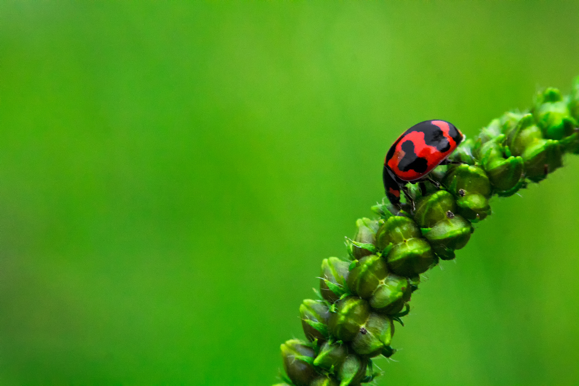 Photograph Lady bug by Vidhu S on 500px