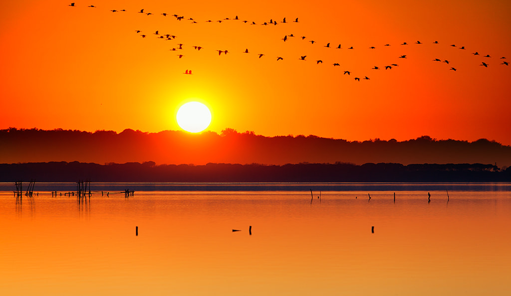 Photograph 	migratory birds by Marco Carmassi on 500px