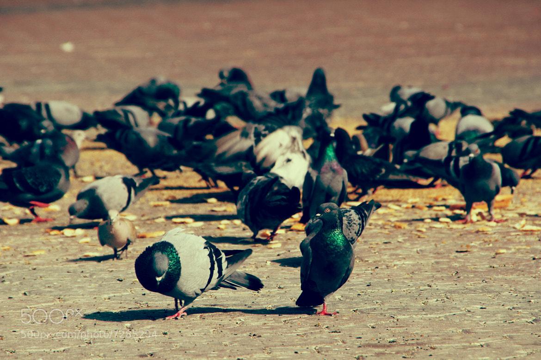 Photograph Birds by Sam Birouty on 500px