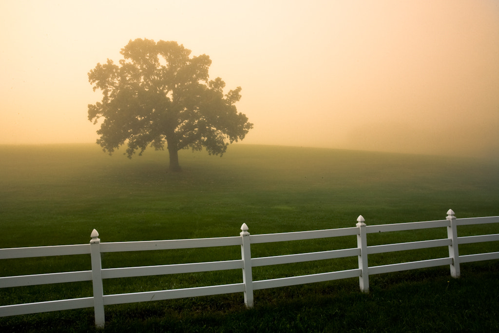 Photograph Morning Mist by Loren Zemlicka on 500px