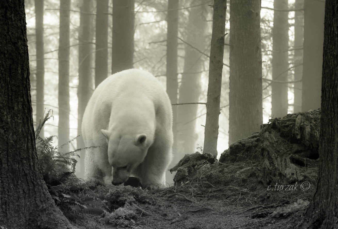 Photograph climate change by christopher turzak on 500px