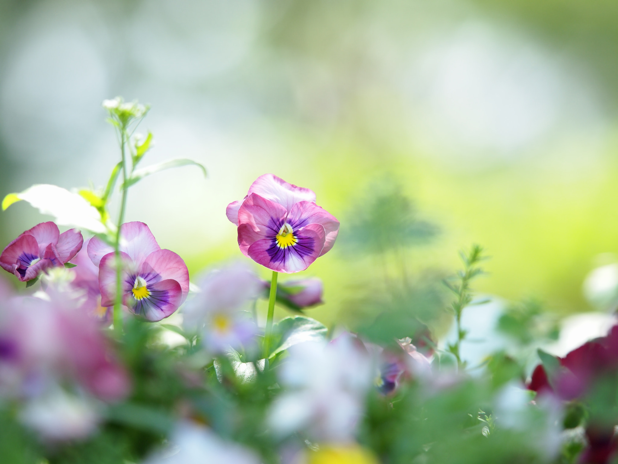 Photograph Colors of early summer #2 by Kaz Watanabe on 500px