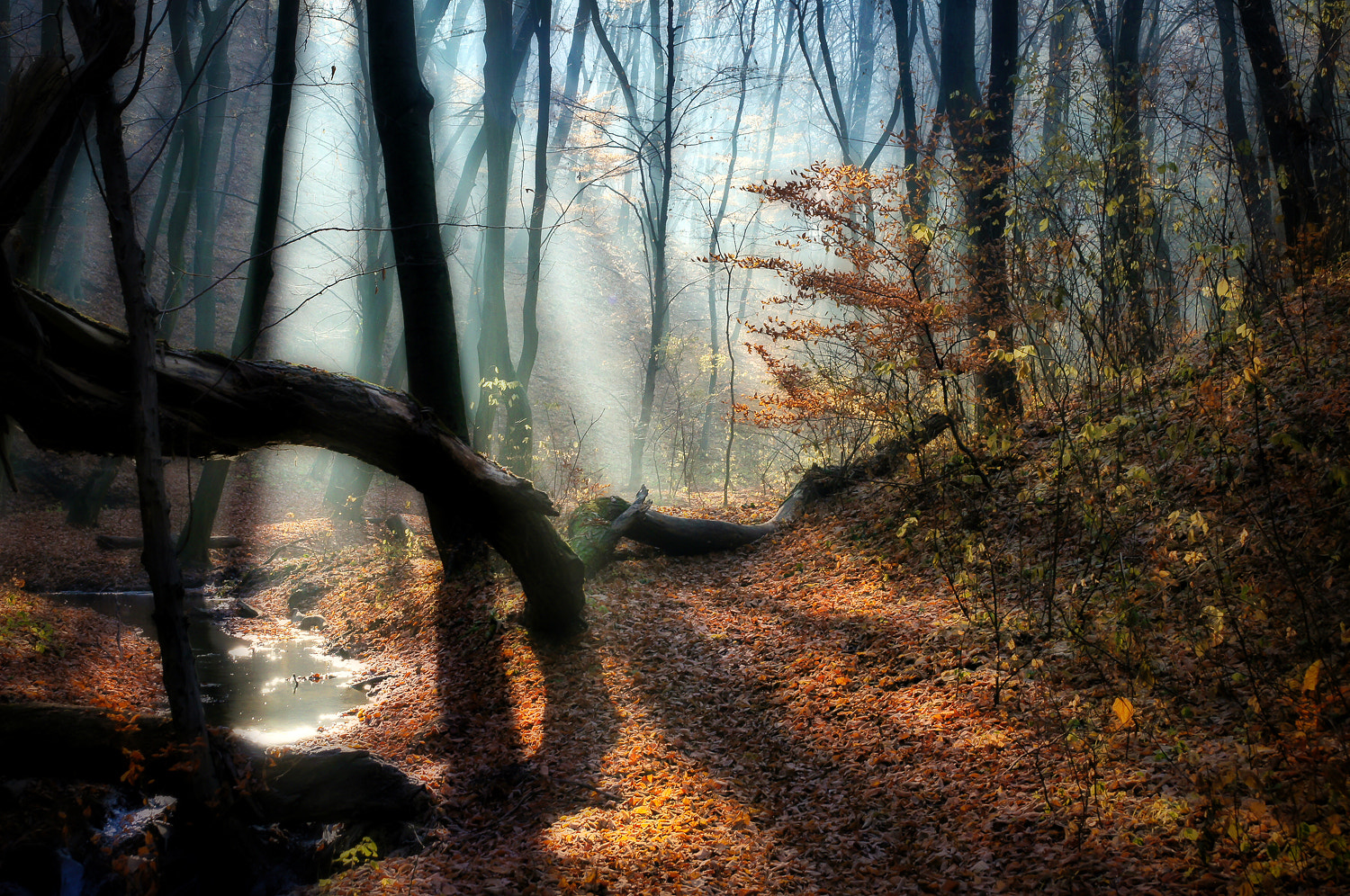 Photograph Deep woods by Andy 58 on 500px