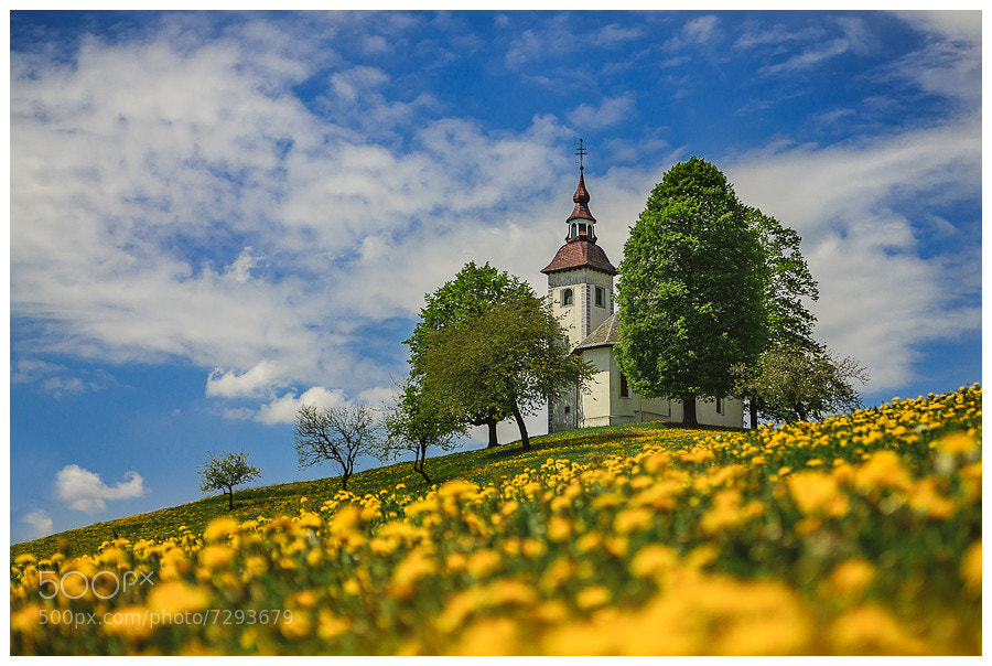 Photograph At the top of the yellow hills by Simon Benedičič on 500px