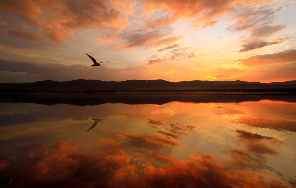Photograph Seagull by Alexander Sysuev on 500px