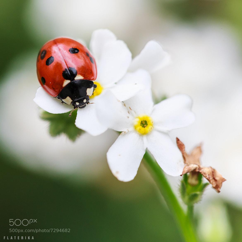 Photograph ladybird by Carole Merten on 500px