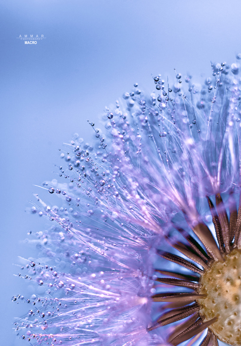 Photograph Many Drops by Ammar Al-Ameen on 500px